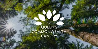 Suggestions Requested For Community Tree Planting