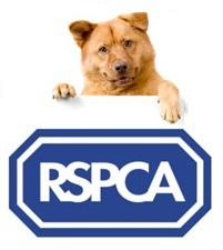 RSPCA Appeal After Dead Emaciated Spaniel Found