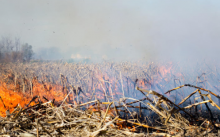 Crews Tackle Warden Bay Cornfield Fire