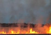 'Deliberate' Corn Field Fire In Rodmersham