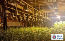 Thousands Of Cannabis Plants Found In Leysdown